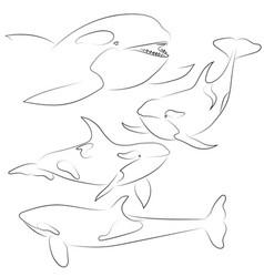 set of black line killer whale on white vector image