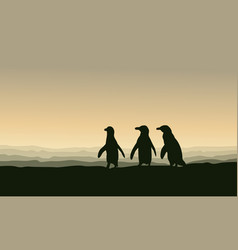 Silhouette of penguin lined at sunset scenery vector