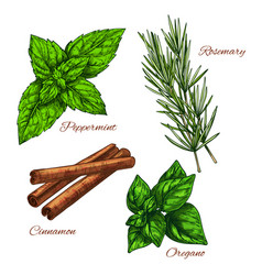 Sketch icons of seasonings herbs and spices vector