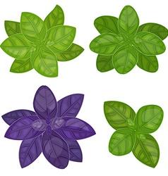 fresh basil herb isolated set vector image