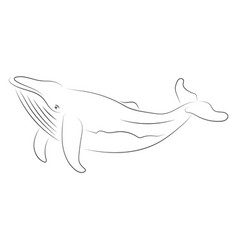 black line whale on white background hand drawing vector image