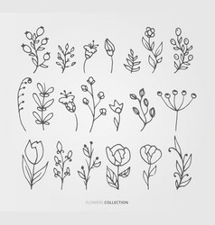 flower and nature set vector image