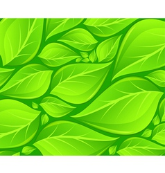 green leaves background texture vector image