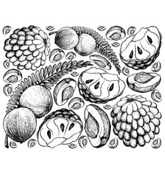 Hand drawn of indian gooseberry and custard apple vector
