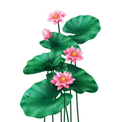 isolated lotus leaves with flowers and bud vector image