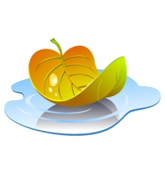leaf in puddle vector image