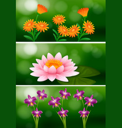Background design with different types of flowers vector