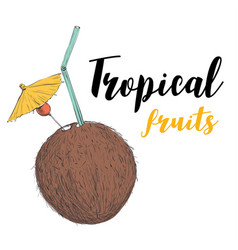 coconut cocktail with a straw and an umbrella vector image