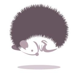 hedgehog 2 vector image