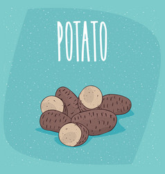 Isolated ripe russet potato tubers whole and cut vector