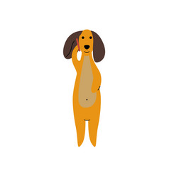 Purebred brown dachshund dog talking on phone vector