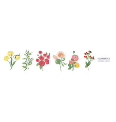 set blooming flowers and decorative flowering vector image