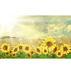 Summer sun over the sunflower field vector