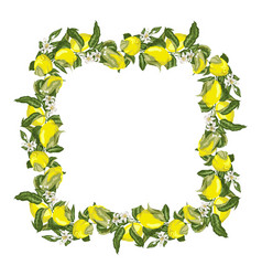 Template square frame wreath with citrus fruit vector