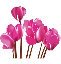 cyclamen flowers vector image vector image