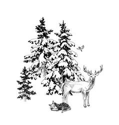 deer familie in winter forest vector image