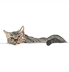 Hand-drawn Cat laying on the ground vector