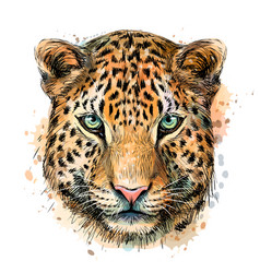 Sketch color portrait jaguar looking forward on vector
