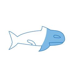 orca whale wildlife marine aquatic vector image vector image