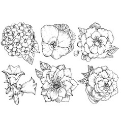 beautiful floral set various flowers black and vector image