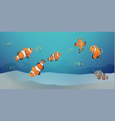 herd of clown fish under the sea vector image
