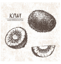 digital detailed kiwi hand drawn vector image