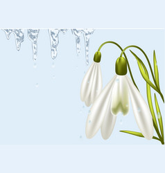 background with snowdrop vector image