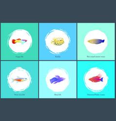 Boxfish and neon tetra fish vector