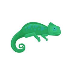Chameleon amphibian animal on vector