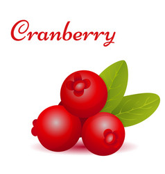 Forest cranberry with leaves vector