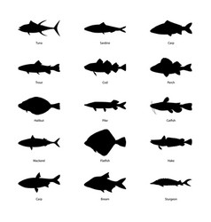 set silhouettes fishes vector image