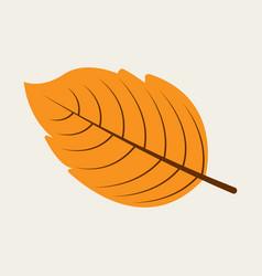 autumn leaf in flat design vector image