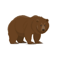 Brown bear or grizzly animal icon of wild predator vector