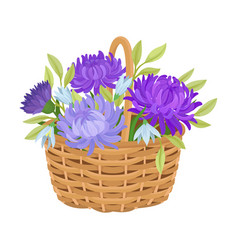 Floral arrangement with aster in wicker basket vector