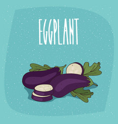 Isolated vegetable fruits aubergine or eggplant vector