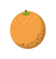 Orange nutrition healthy diet vector