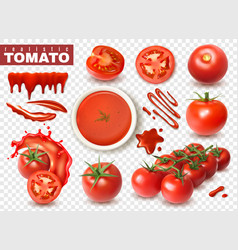 realistic tomato transparent set vector image