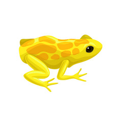 Yellow spotted frog reptile animal vector