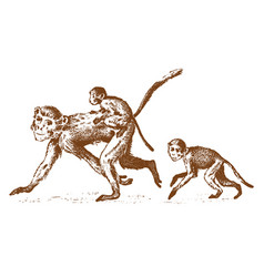 monkeys or humanoid wild animals family in nature vector image