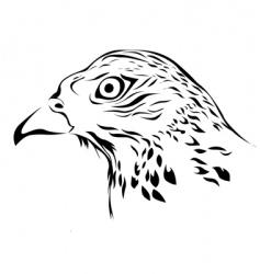 wild hawk vector image vector image