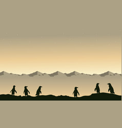 Beauty landscape penguin silhouette at sunrise vector