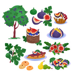 fig fresh fruity food and ripe figs healthy vector image
