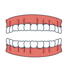 Human teeth isolated icon vector