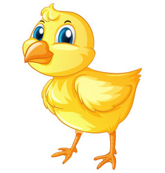 Little chick on white background vector