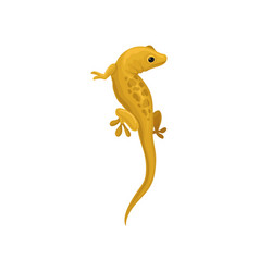 lizard amphibian animal on a vector image