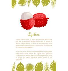 Lychee exotic juicy fruit litchi liechee vector