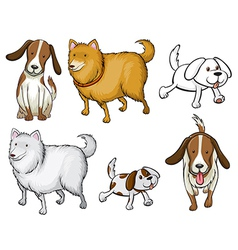 Different specie of dogs vector image