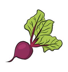hand drawn garden beet vector image