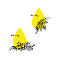 ginseng oil icon set hand drawn sketch extract vector image
