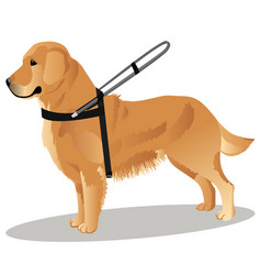 Guide dog retriever vector